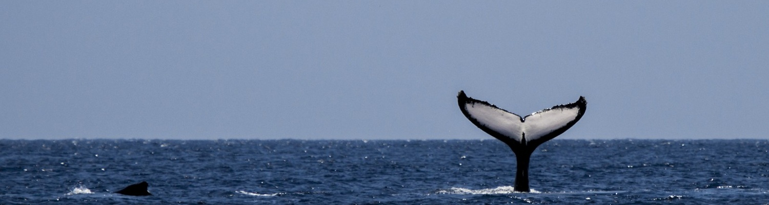 tours mossel bay, whales mossel bay
