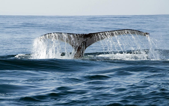 Whale mossel bay tour, walking tours south africa, guided walks south africa