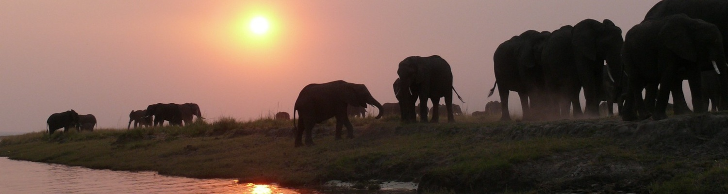 Elephant, Safaris Southern Africa, Incentive tours Southern Africa