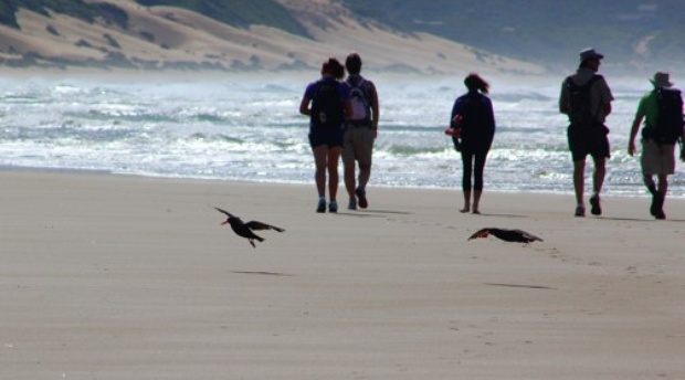 Oystercatcher Trails in Mossel Bay - luxury guided hiking on the Garden Route, South Africa